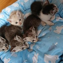 「里親募集中の子猫ちゃん❤️」サムネイル1