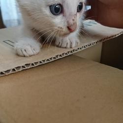 「里親募集中の子猫ちゃん❤️」サムネイル2