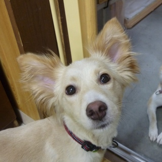 中型犬mix♀・トイレ躾け済・室内飼い・1~2歳位