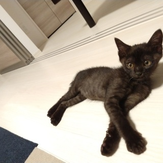 2ヶ月の黒猫