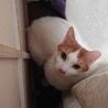 寄り添う猫モッチー サムネイル2