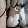 寄り添う猫モッチー サムネイル3