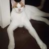寄り添う猫モッチー サムネイル4