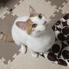 寄り添う猫モッチー サムネイル5