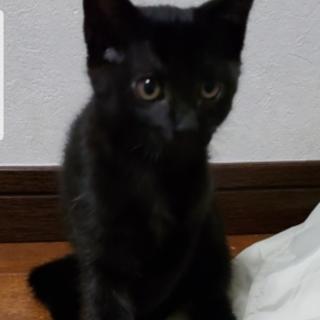 ちょっぴりシャイな黒猫ちゃん♪