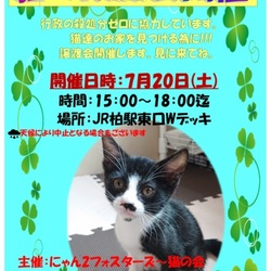 保護猫譲渡会@JR柏駅東口Wデッキ サムネイル1