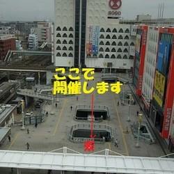 保護猫譲渡会@JR柏駅東口Wデッキ サムネイル3