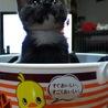 子猫ピッカ サムネイル2