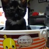 子猫ピッカ サムネイル3