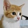 【7/20お台場】茶白の美猫ラテくん