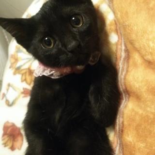 【7/20お台場】とってもかわいい黒猫兄妹ペアで