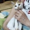 お外で産まれたけど超甘えん坊なカラフル兄妹ペアで サムネイル7