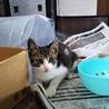 可愛い子猫ちゃん  写真随時更新します。