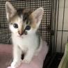 三毛&黒白丸顔な超美猫5兄妹ペアで サムネイル2