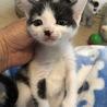 三毛&黒白丸顔な超美猫5兄妹ペアで サムネイル6