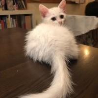 依頼猫❤️ジュニア君