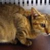 お目目くりくりの可愛い子猫。収容期限7/25朝迄