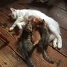 可愛い子猫の里親様を探しています
