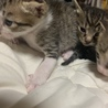 大大大至急です‼︎可愛い子猫の里親さん募集‼︎ サムネイル3