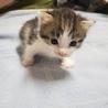 子猫の里親募集 サムネイル5