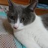 猫の母子2匹里親募集 サムネイル2