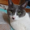 猫の母子2匹里親募集 サムネイル3