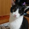 猫の母子2匹里親募集 サムネイル4