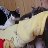 猫の母子2匹里親募集 サムネイル6
