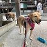 ビビリですが、犬が大好きな優しい女の子。 サムネイル5