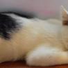 イケメンの子猫ちゃんです。収容期限7/26朝迄
