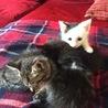 子猫の里親様を募集しています。 サムネイル6