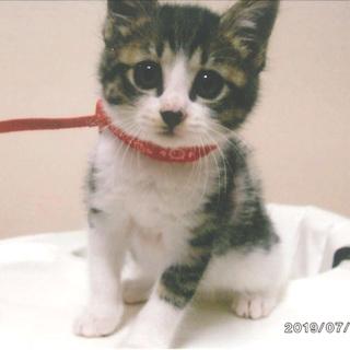 人馴れして、とてもおとなしい子猫です=^_^=