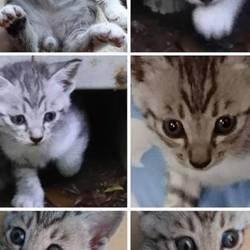 「里親さん募集の子猫ちゃん紹介❤️」サムネイル1
