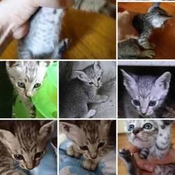 里親さん募集中の子猫ちゃん紹介❤️