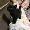 急募!黒猫ちゃん1カ月〜2ヶ月程度の里親様募集 サムネイル2