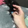 急募!黒猫ちゃん1カ月〜2ヶ月程度の里親様募集 サムネイル3