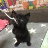 急募!黒猫ちゃん1カ月〜2ヶ月程度の里親様募集 サムネイル4