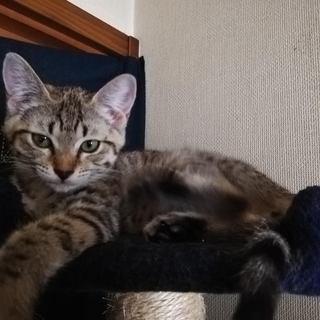 生後2か月の元気な子猫