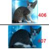綺麗なお顔立ちの子猫達です。収容期限7/26朝迄 サムネイル4