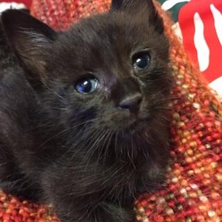 保護猫ちゃんの家族を探しています(^^)