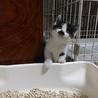 生後2ヶ月程の子猫です