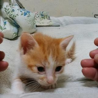 2匹の子猫の里親様募集します。