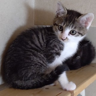シュッとした美猫『ミチル』ちゃん