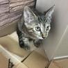生後3ヶ月弱の子猫2匹です。 サムネイル2