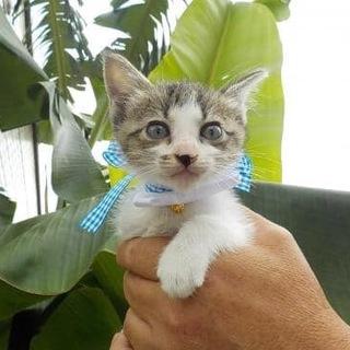 可愛い子猫くん!【2〜3ヶ月】