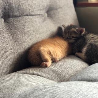 1ヶ月半の子猫