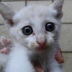 里親募集中の子猫ちゃん❤️