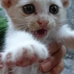 「里親募集中の子猫ちゃん❤️」サムネイル3