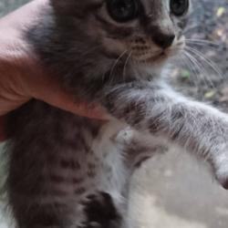 「里親さん募集中の子猫ちゃん❤️」サムネイル1