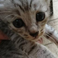 「里親さん募集中の子猫ちゃん❤️」サムネイル3